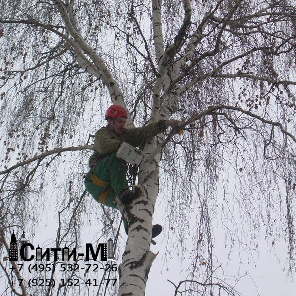 кронирование и обрезка деревьев цена
