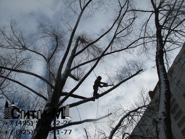 удаление деревьев цена