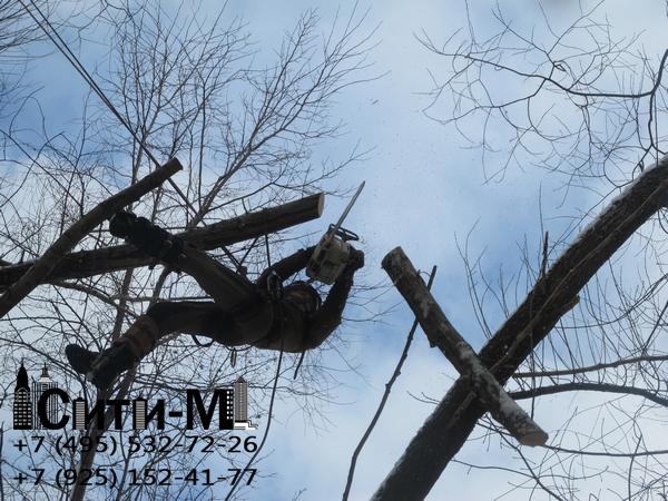 удаление деревьев в Москве и Подмосковье